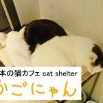 猫カフェで猫をナデてきました☆ 『かごにゃん 新市街店』