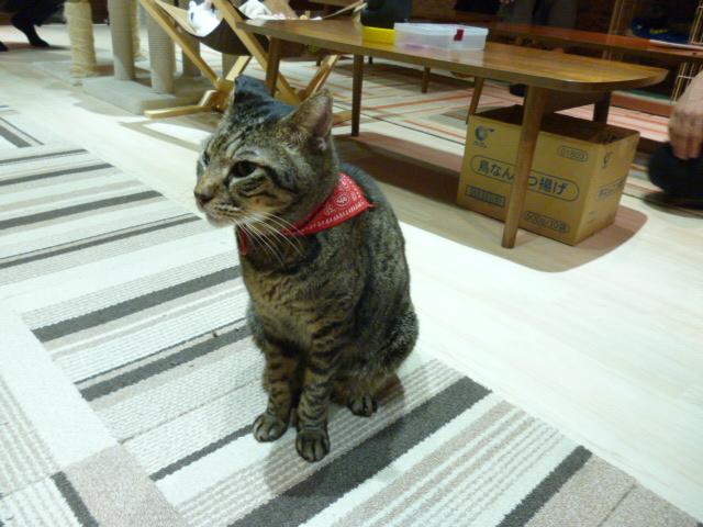 バンダナを巻いた猫