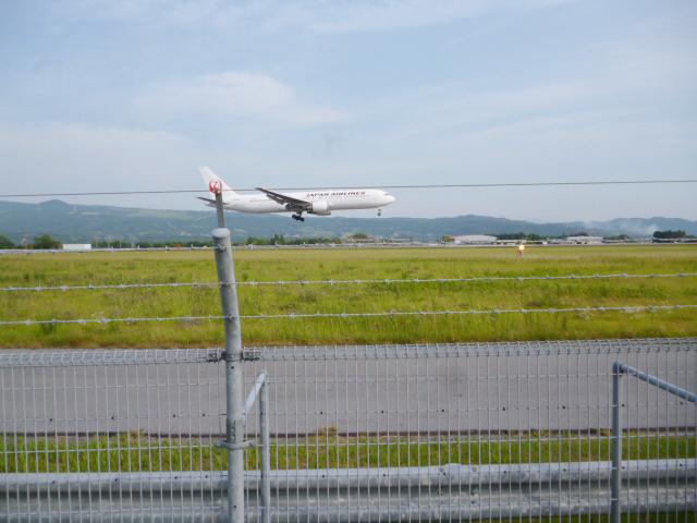 JAL 飛行機 着陸