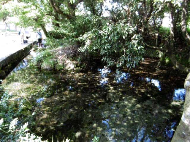 池の川水源3