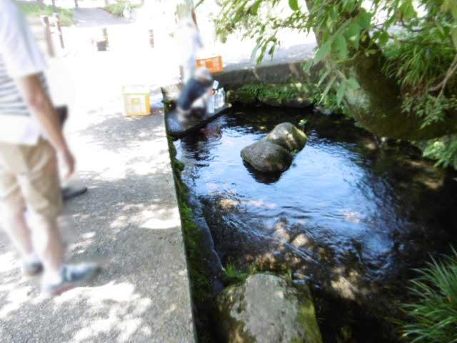 池の川水源1