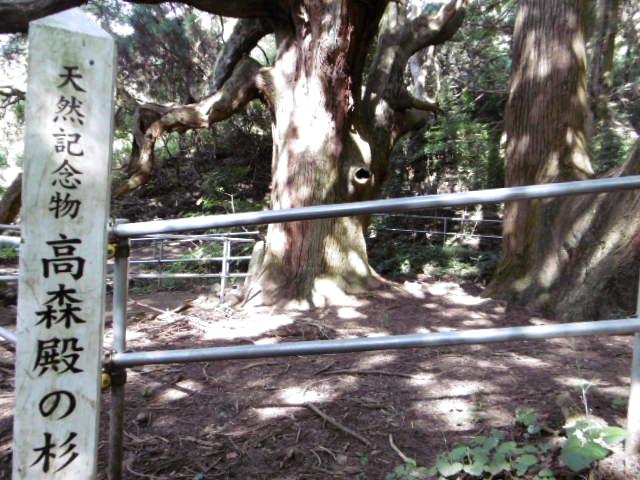 天然記念物 高杉殿の杉