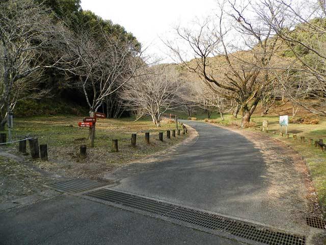 立田山自然公園 桜の木