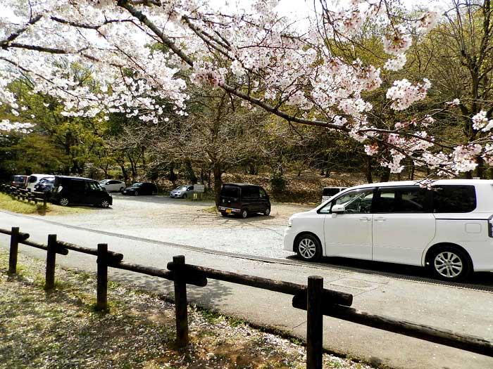 立田山自然公園 桜